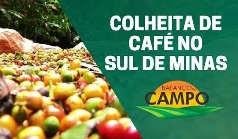 Colheita de café no Sul de Minas